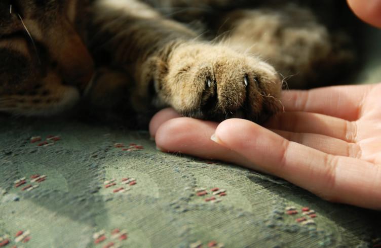 katze ist eifersüchtig auf kater