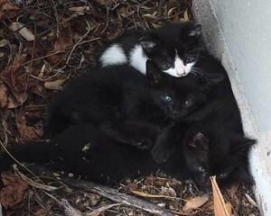 Unerwünschte Katzenkinder