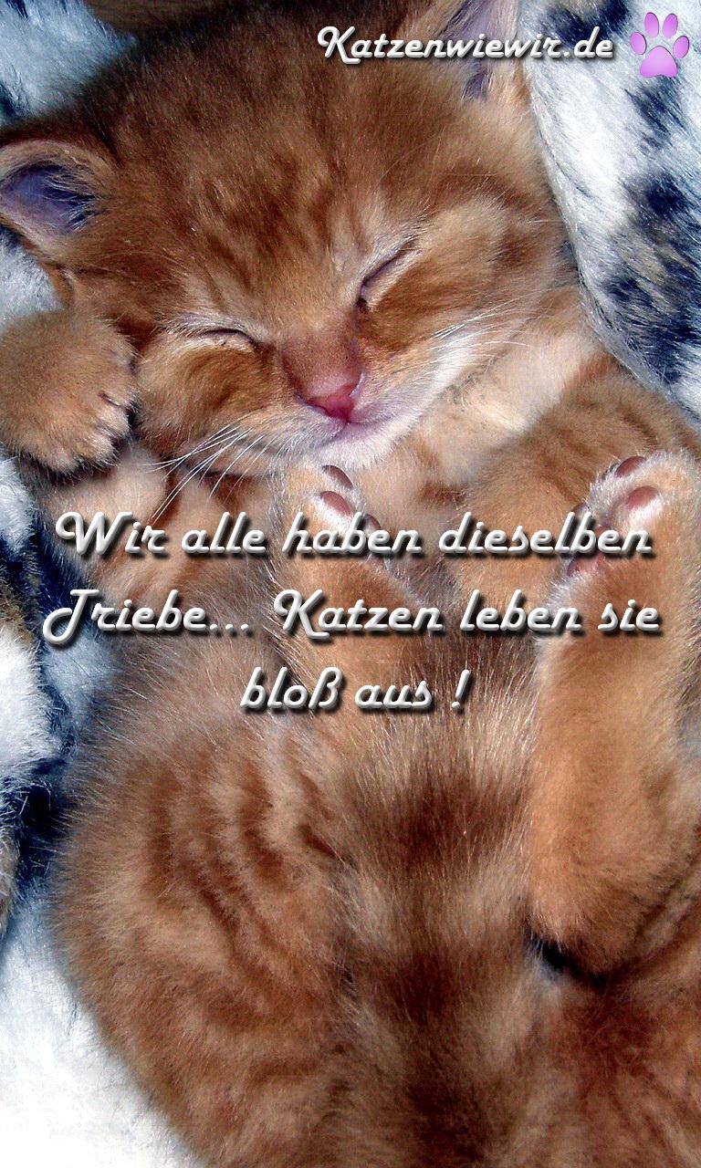 Katzen-Bild / Katzen-Spruch 2