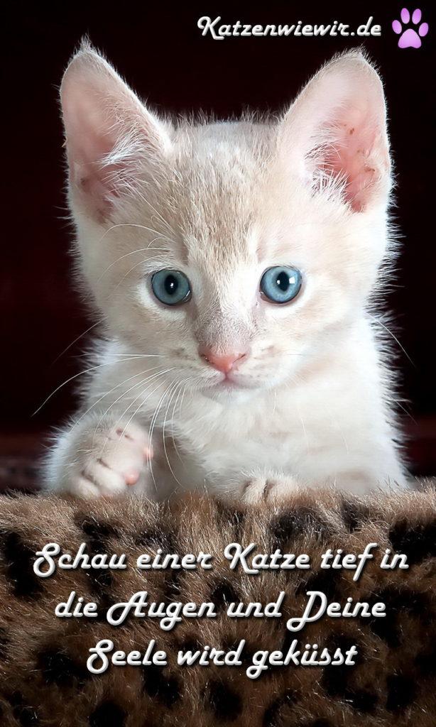 Katzen-Bild / Katzen-Spruch 5