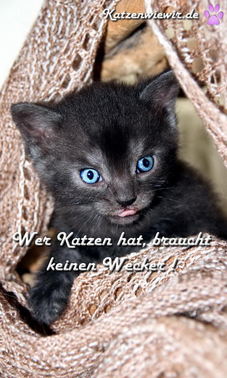 katzen spruch wer katzen hat braucht keinen wecker. Black Bedroom Furniture Sets. Home Design Ideas