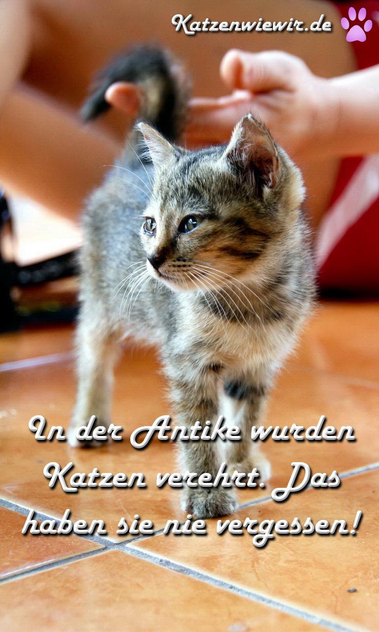 Katzenbilder lustig mit spruchen for Schone babymobel