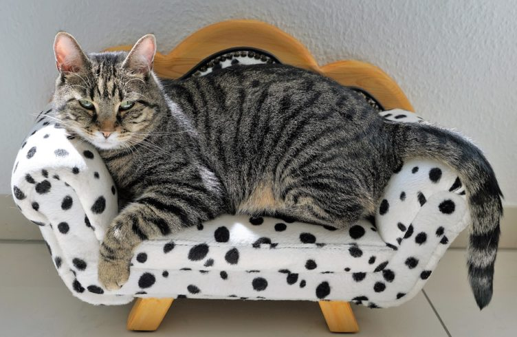 alle produkte wurden vom katzenwiewir team handverlesen und entsprechen unseren besonders hohen. Black Bedroom Furniture Sets. Home Design Ideas
