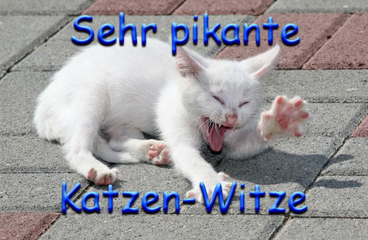 Katzen Witz