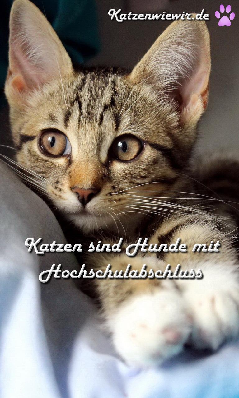 Süße Katzen Bilder 4 | katzenwiewir.de