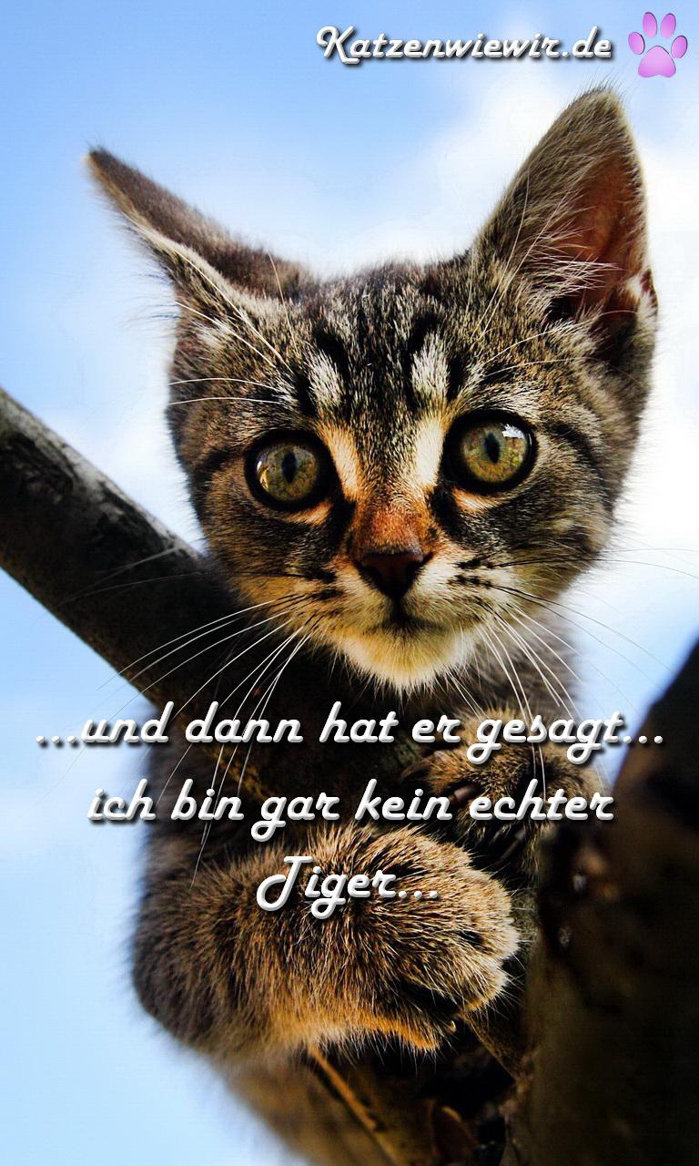 Katzen Bilder Mit Sprüchen