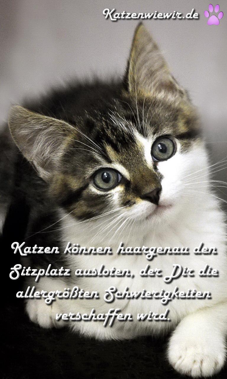 Katzen Spruch
