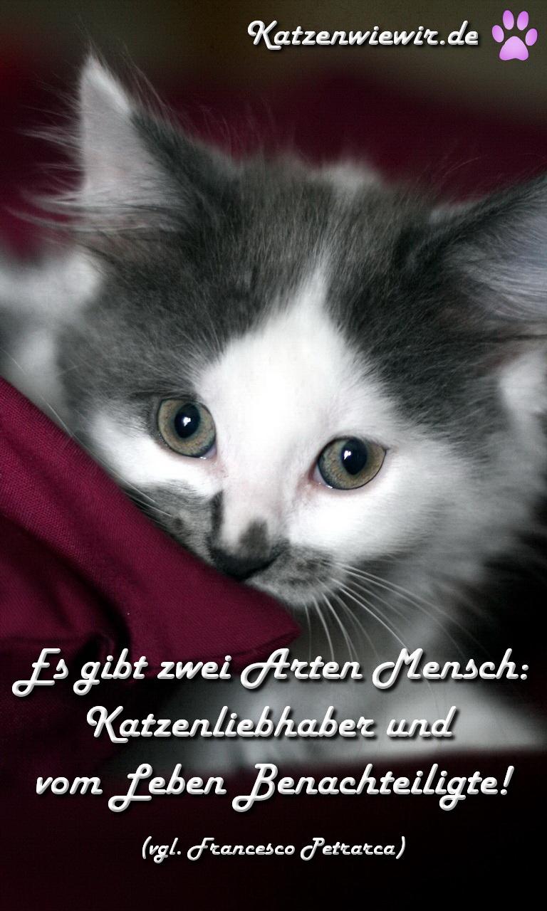 Susse Katzen Bilder 6 Katzen Wie Wir