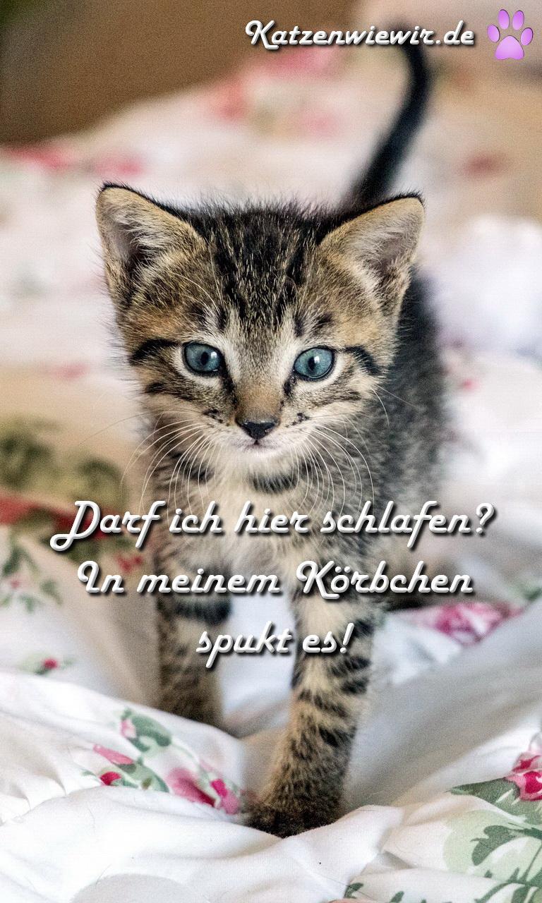 Sprüche Zu Katzen