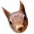 Dieses Bild hat ein leeres Alt-Attribut. Der Dateiname ist squirrel-4353455_640-b.jpg