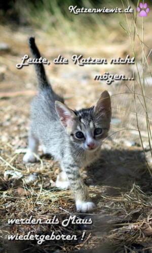 baby_katze_007_mobile (3)