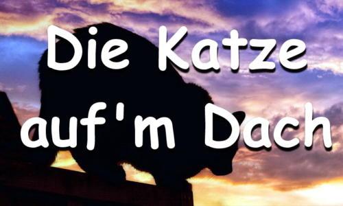 katzenwiewir-daily-cat-58