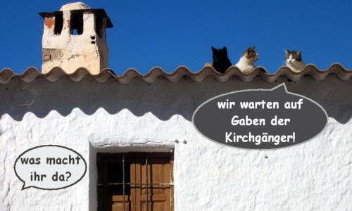 katzenwiewir-daily-cat-59