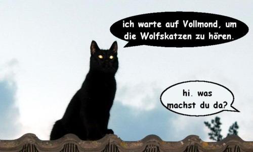 katzenwiewir-daily-cat-61