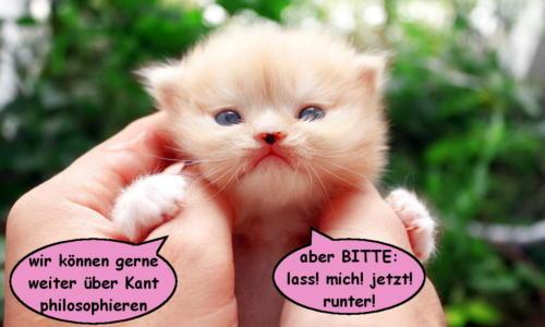 katzenwiewir_dailycat_016