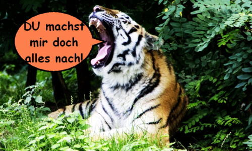 katzenwiewir dailycat 005